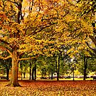 Autumn in Boston  by LudaNayvelt