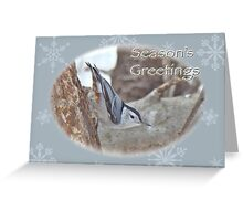 Season's Greetings Card - White-breasted Nuthatch Songbird Greeting Card