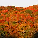 Autumn in the Ozarks #2 by John Carpenter