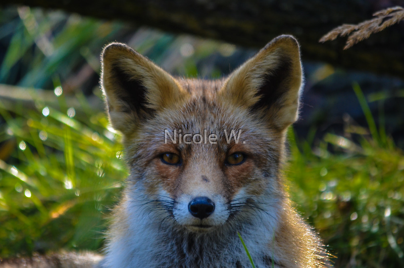 Upclose and personal by Nicole W.