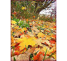 The Surrender of Leaves Photographic Print