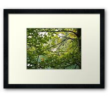 Trees and mountain lake Framed Print