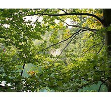 Trees and mountain lake Photographic Print