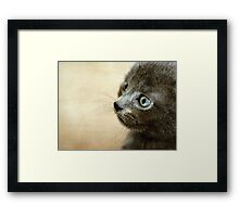 Kitten XV Framed Print
