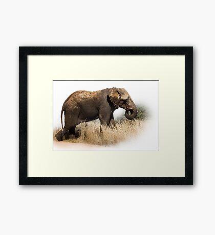 TOOTHLESS ELEPHANT Framed Print