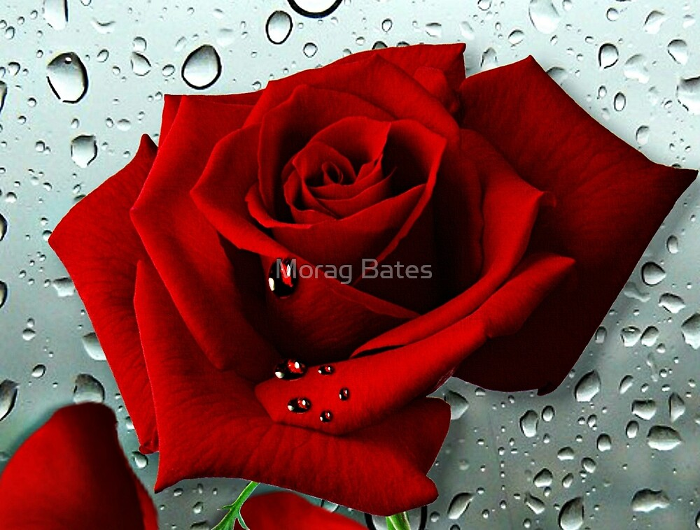Tears from my Heart by Morag Bates