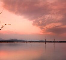 Down Among the Dead Trees - Moogerah Dam Qld Aust. by Beth  Wode