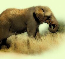 TOOTHLESS ELEPHANT by RonelBroderick