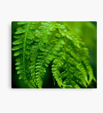 Green Focus Canvas Print