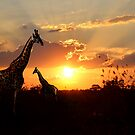 GIRAFFE IN THE SUNSET by RonelBroderick