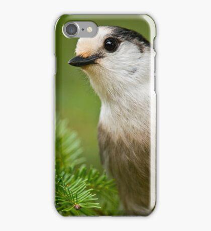Gray Jay iPhone Case/Skin