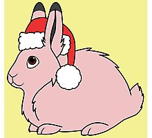 Light Pink Arctic Hare with Christmas Red Santa Hat Photographic Print