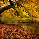 Nidd Gorge in Autumn by skinnyde