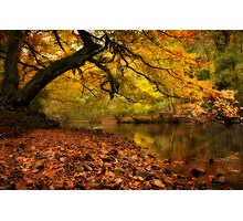Nidd Gorge in Autumn Photographic Print