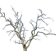 Trees Silhouette by Edward Middleton