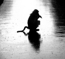 Silhouette of chacma baboon  by Edward Middleton
