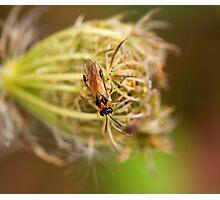 Turnip Sawfly Photographic Print