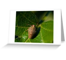 Issus coleoptratus nymph Greeting Card