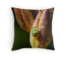 Green Shield Bug Nymph Throw Pillow