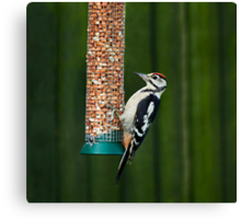 Great Spotted Woodpecker on feeder Canvas Print
