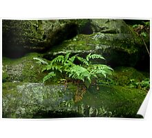 Fern and Rocks Poster