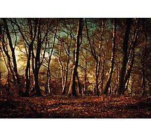 Autumn in the Forest Photographic Print