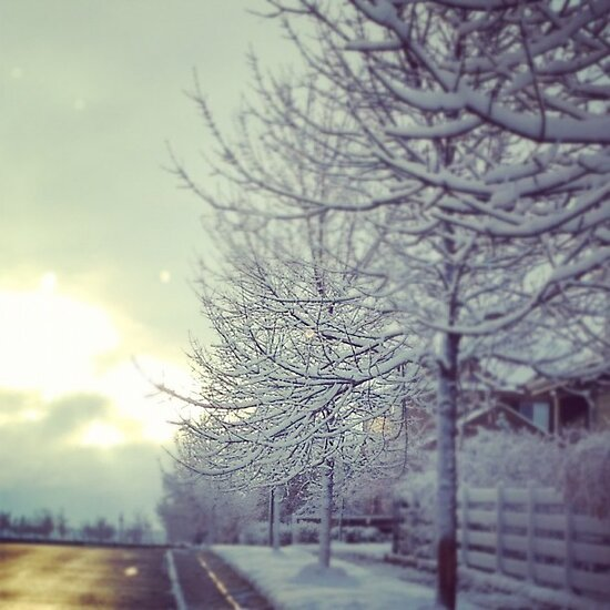 First Snow by Jen Wahl