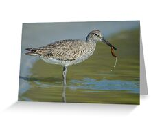 Willet lunch Greeting Card