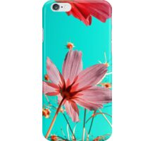 cosmos flowers iPhone Case/Skin
