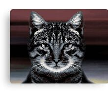 The eyes are mesmeric!!! Canvas Print