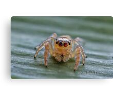 The Jumping Spider Canvas Print