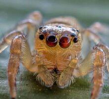 The Jumping Spider Sticker