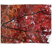 Cherry foliage  Poster