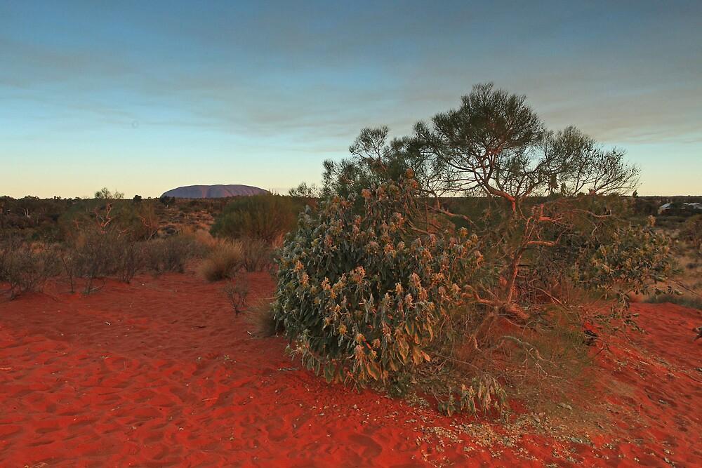 Uluru Evening by Ursula Rodgers