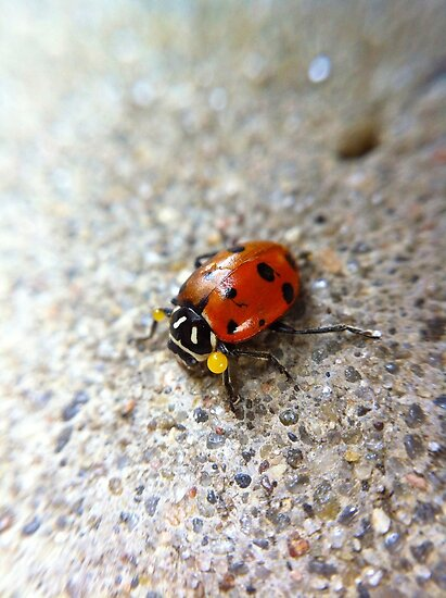 Lady Beetle by lindsycarranza