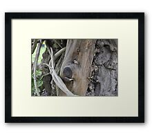 Dog in a Tree trunk Framed Print