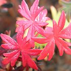 Red leaves  by flashcompact