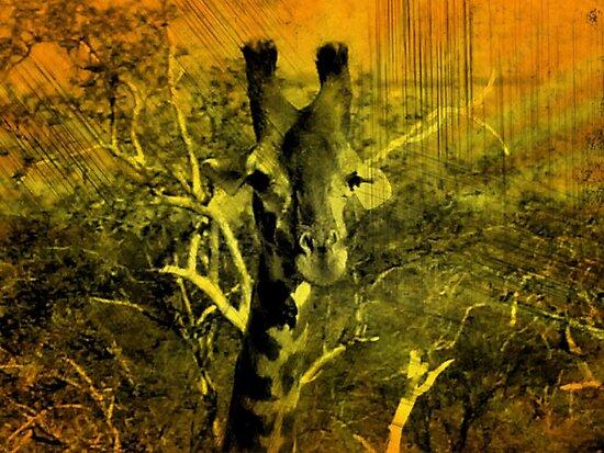 Tsavo Delight by Matt Jewitt