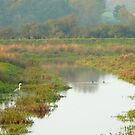 River Cuckmere in Autumn  by mikebov