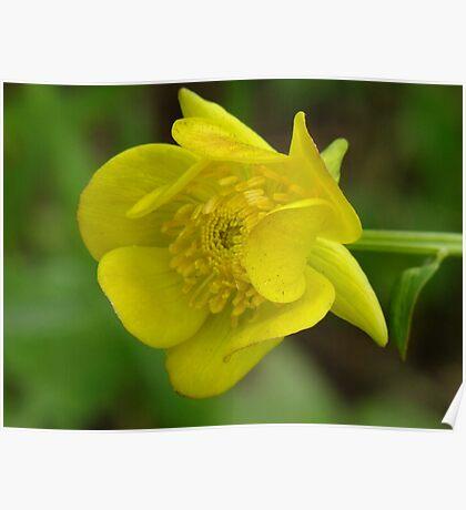 Golden Globe Flower Poster