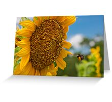 Bee & Sunflower Greeting Card