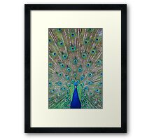 Peacock 1 of 3 Framed Print