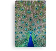 Peacock 1 of 3 Canvas Print