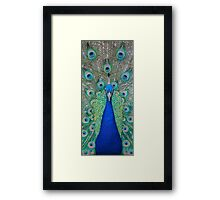 Peacock 2 of 3 Framed Print