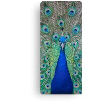 Peacock 2 of 3 Canvas Print