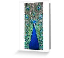 Peacock 2 of 3 Greeting Card
