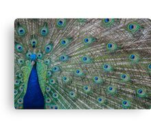 Peacock 3 of 3 Canvas Print