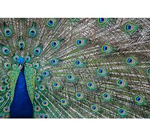 Peacock 3 of 3 Photographic Print