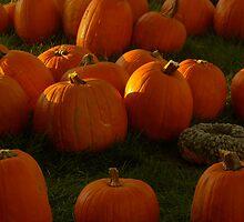 Pumpkin Menagerie, 2012 by Claudia Smaletz