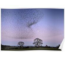 Murmuration of Gretna Starlings Poster